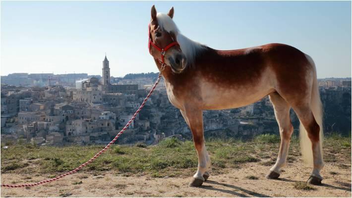 passeggiata a cavallo a Matera
